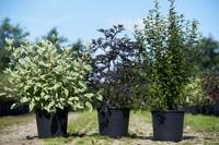 Splendor Plant Jonstorp för reklam