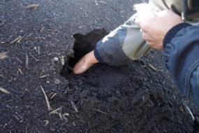 Sticka ner handen i en kompost